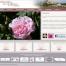 grignan-roses-portfolio